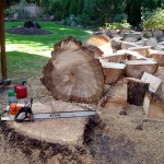 Stump Cutting Seattle