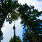 Emerald Tree Service Seattle