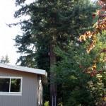Tree Trimming Seattle