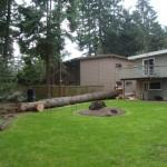 Seattle Tree Down