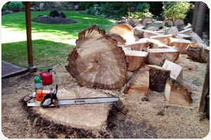 Stump Removal Seattle